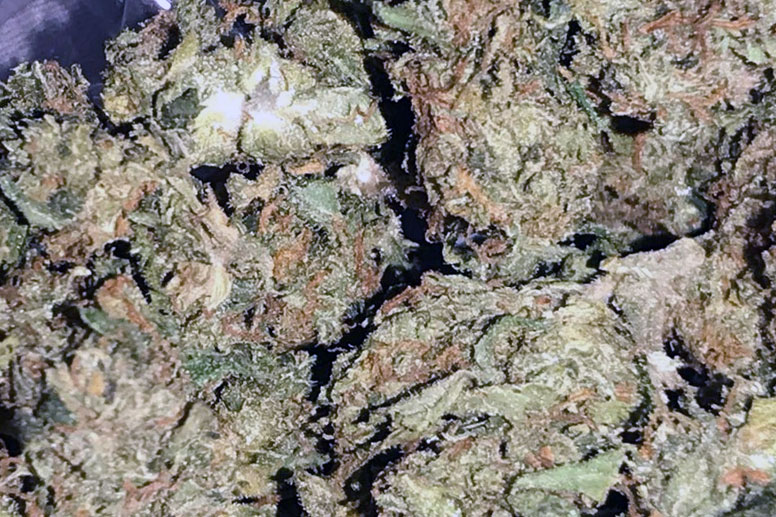 Mold in Michigan Cannabis Causes Recalls